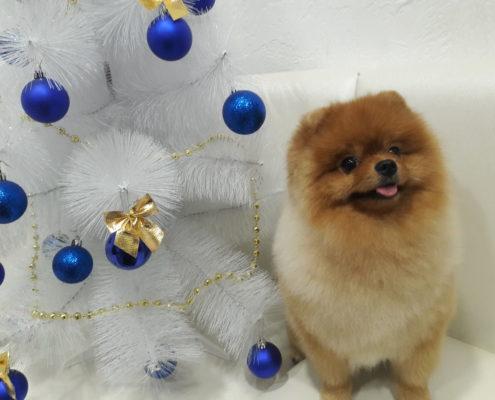 Стрижка собак Минская