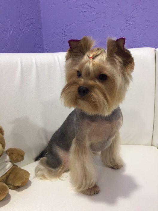 Модные стрижки собакам