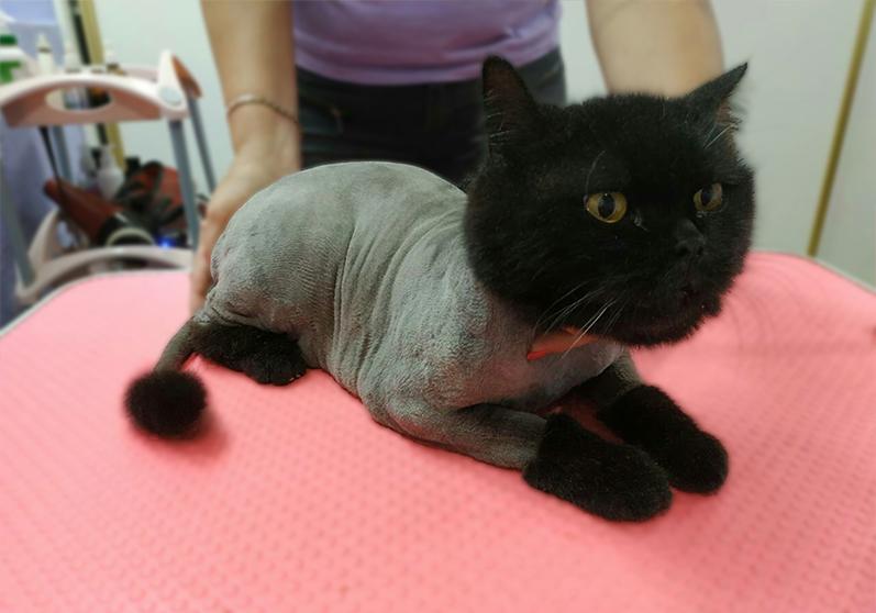 стрижка котов не дорого